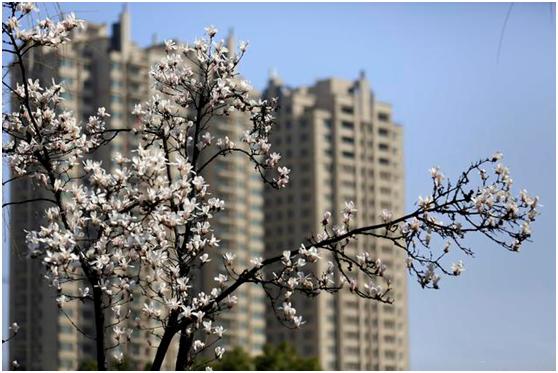 """楼市可以回暖,但坚持""""房住不炒""""、维稳房价依旧重要"""